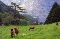 Hestar i Erdal